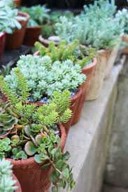 Small Picture 68 best Succulents and cacti images on Pinterest Succulent