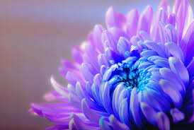 Image result for purple nature