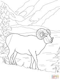 Small Picture Argali Mountain Sheep coloring page Free Printable Coloring Pages