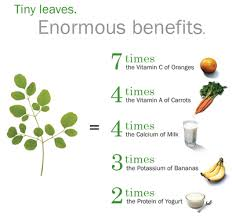 Moringa Tree Trees For Life