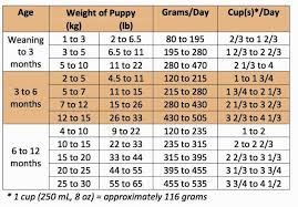 Puppy Feeding Chart Golden Retriever Labrador Puppy Feeding Chart Dogs Breeds And Everything