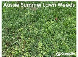Identifying Killing Preventing Summer Weeds