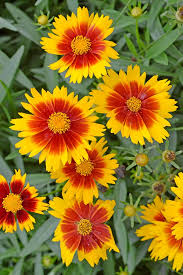 best flowers for florida gardens