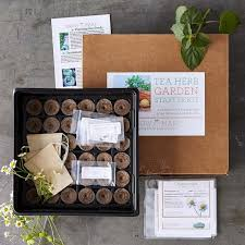 tea herbs garden kit