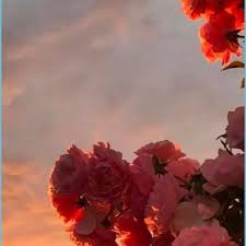 Pink Flowers Aesthetic Wallpapers - Top ...