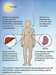 Vitamin D Deficiency Wikipedia