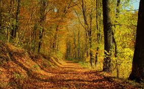HD Autumn Forest Landscape Desktop Wallpaper Marvelous Landscape Hd
