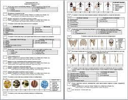 Контрольная работа по биологии по теме Опорно двигательная  Контрольная работа по биологии по теме Опорно двигательная система человека