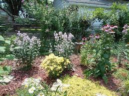 Best 25 Inexpensive Backyard Ideas Ideas On Pinterest  Patio Landscape My Backyard