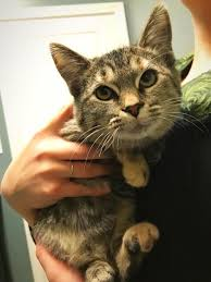 Free Kitten To Good Home Banning Ca Patch