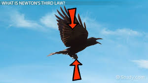 practice applying newton s third law