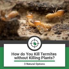 natural termite killer. Perfect Natural Kill Termites Without Killing Plants And Natural Termite Killer A