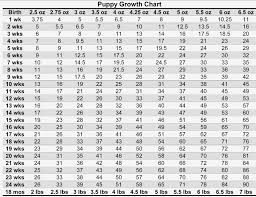 Great Dane Size Chart Competent Weight Chart For Puppies Growth Average Horse