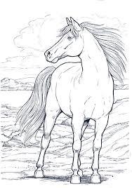 Cavallo11 Disegni Da Colorare Per Adulti Dipinti E Artisti
