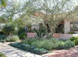 Backyard Design San Diego Cool Dappled Shade Garden In San Diego County Featuring Dracaena Draco