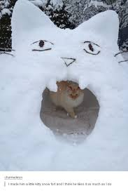 Pin by Wendi Hudson on Cats Meow! | Snow fort, Cats, Crazy cats
