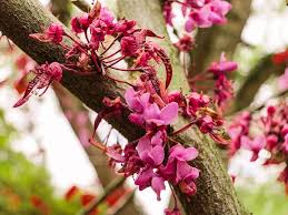 top 5 early spring flowering trees