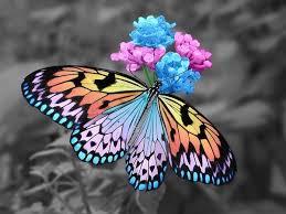 """Résultat de recherche d'images pour """"papillons"""""""