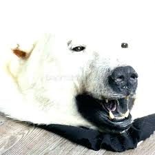 faux bear rug polar and skin good looking with head fur taxidermy fake he