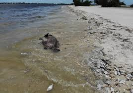 What Is A King Tide Red Tide Algae Flooding Among Risks