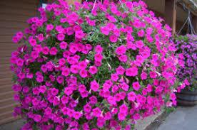 denver garden centers. FULL SERVICE GARDEN CENTER / ORGANIC VEGETABLE STARTS Denver Garden Centers T