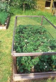75 best en deters for the garden images on how to keep deer out of