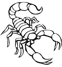 Small Picture free animals scorpion printable coloring pages for preschool