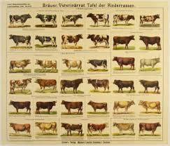 Cattle Chart Cow Breeds Dairy Cattle Cattle Farm Animals