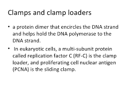 enzymes and proteins in dna replication 11