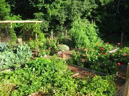 Kitchen Garden Trough The Easy Kitchen Garden