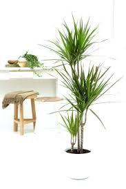 modern office plants. Modern Office Plants Cool Best Cubicle Six Houseplants Find It Really Difficult To Kill Desk