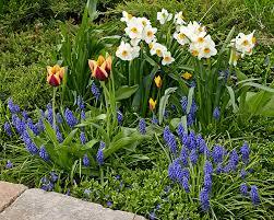 spring flowering bulbs garden gate