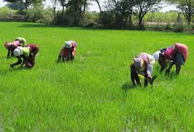 2018: Kano State AFAN Chairman Assures of Bumper Harvest