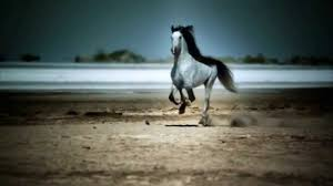 wild horses galloping. Beautiful Wild Wild Horses Galloping For YouTube