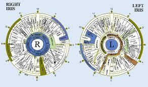 Veracious Iridology Iris Chart 2019