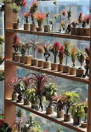 Air plants. This is by far the coolest display I have ever seen!
