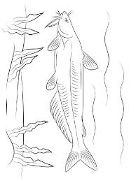 Small Picture Catfish coloring pages Download and print Catfish coloring pages