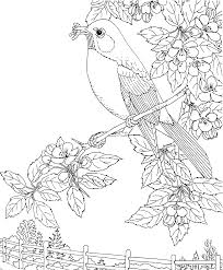 Bird Colouring Pages For Adults With Northern Cardinal Coloring