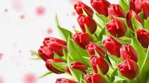bouquet red tulips flowers hd wallpaper