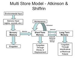 Long Term Memory Chart Information Processing Wikipedia