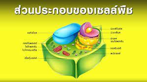 ส่วนประกอบของเซลล์พืช
