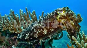 Real Underwater World 75023 TWEB