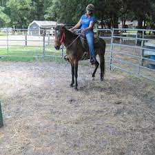 Penny Crosby (@Penny_Horse) | Twitter