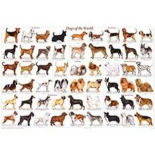 dog chart amazon com 123posters dogs of the world popular breeds