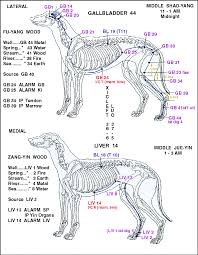Canine Acupuncture Meridian Chart Pin By Marie Cardenas On Dogs Acupuncture Acupressure