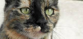 """Résultat de recherche d'images pour """"photo chat """""""
