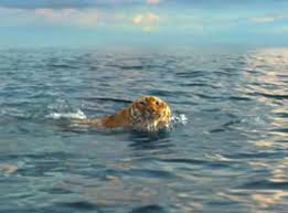 life of pi from upcoming movies e news now share your vote