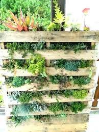 succulent wall gardens garden planter for ideas diy