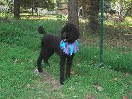 Welded wire dog fence Black Wire Re Weldedwoven Wire Fencing Dog Forums Weldedwoven Wire Fencing