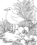 Small Picture Blue Hen and Peach Blossom Delaware State Bird and Flower coloring